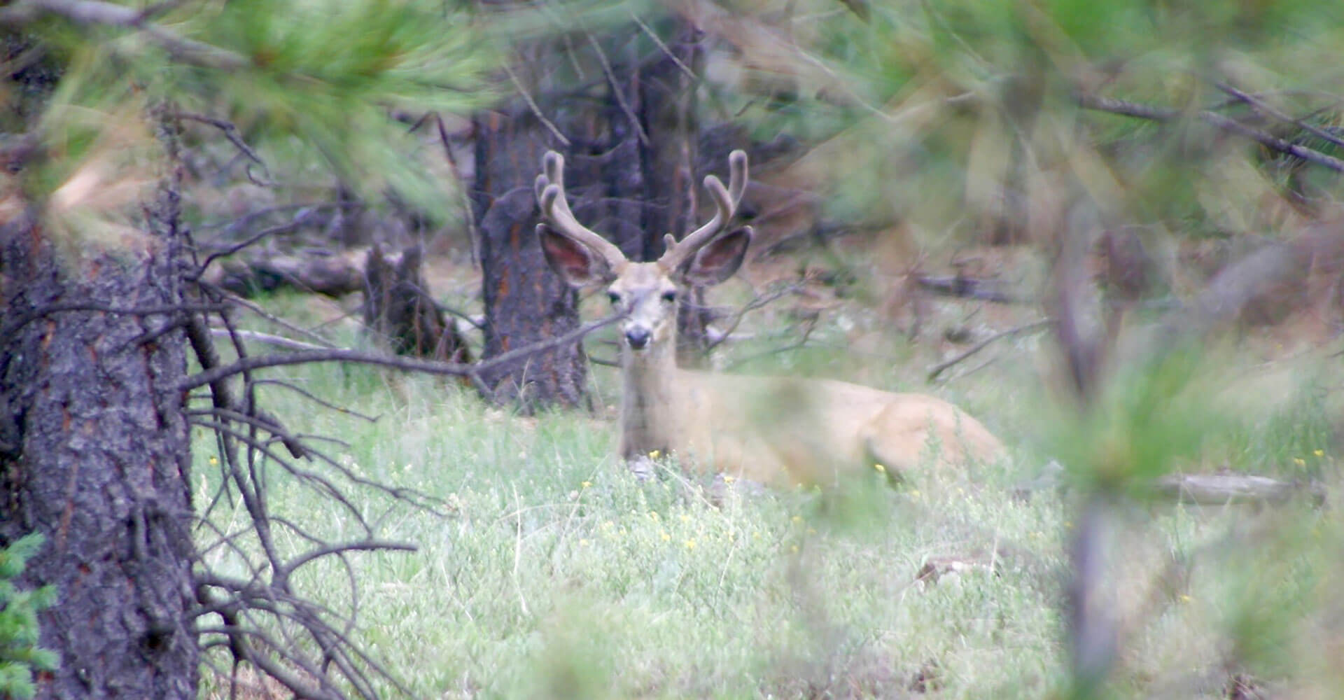 New Mexico Mule Deer Hunting Ranch